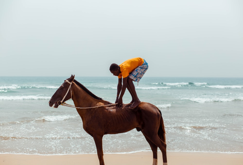 Description: man in blue shirt riding brown horse on beach during daytime